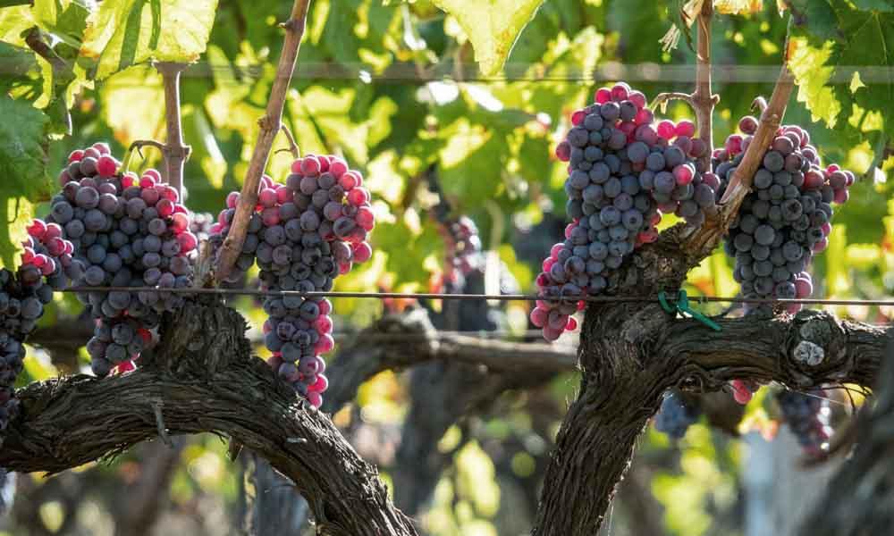 vino Etna tour Etnawild - wine Etna tour Etnawild - Wein Ätna Tour Etnawild