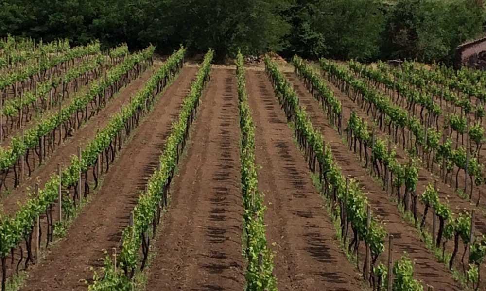 Etna wine - Ätna Wein - Etna vino